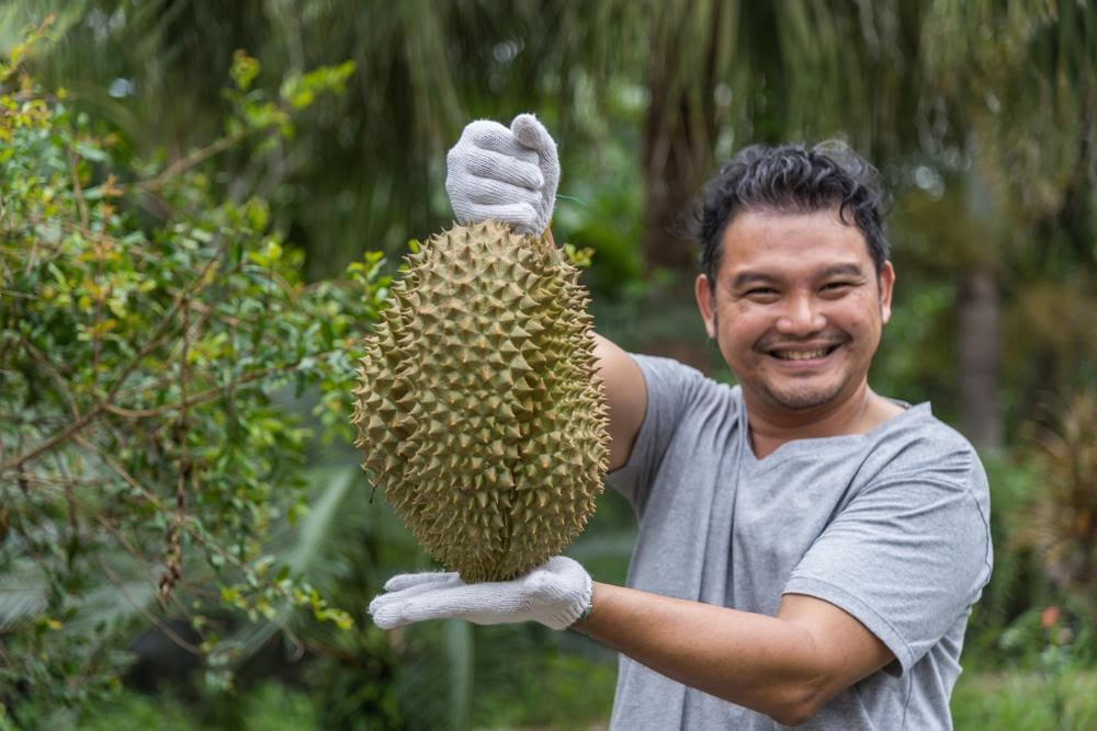 Find a Reliable Durian Seller