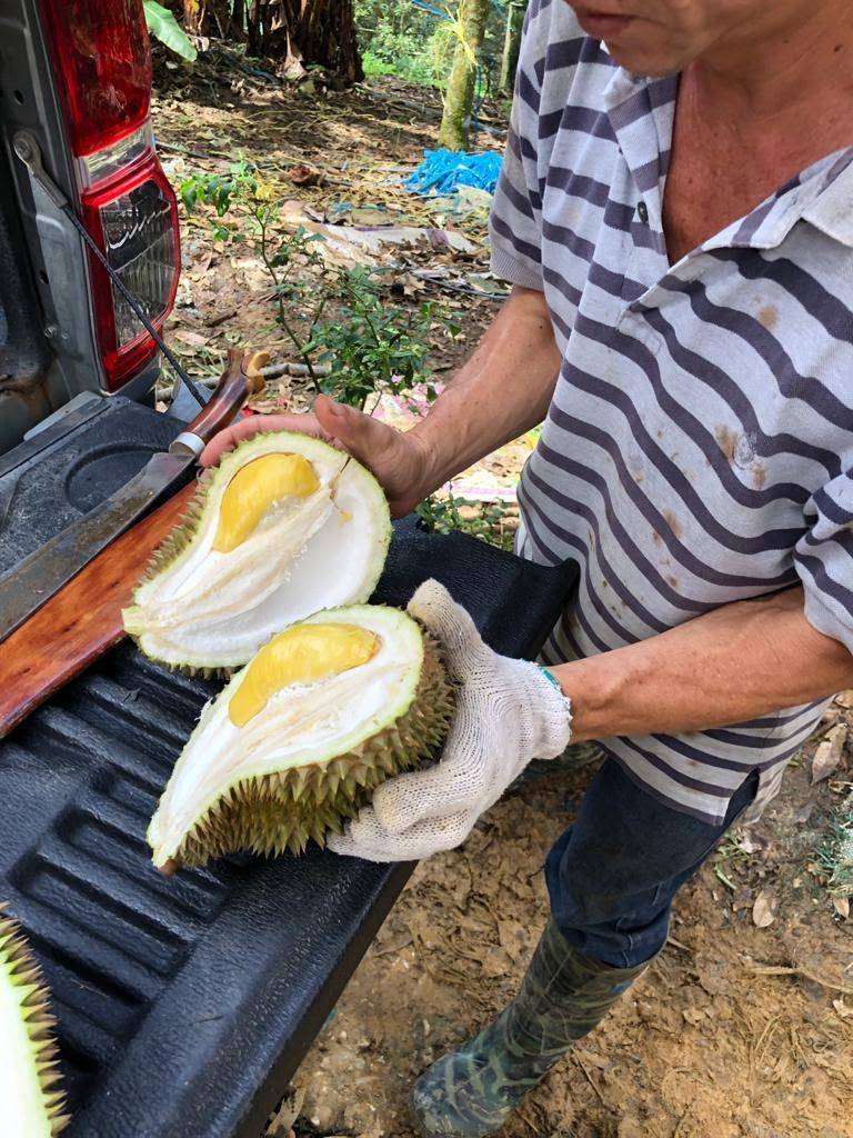Step 2- Harvest the Durians