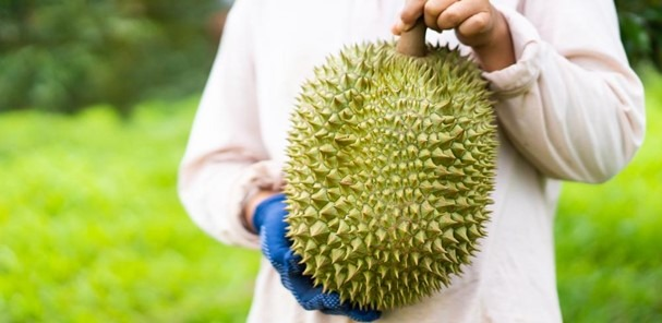 Top 9 Questions about Durian Answered!