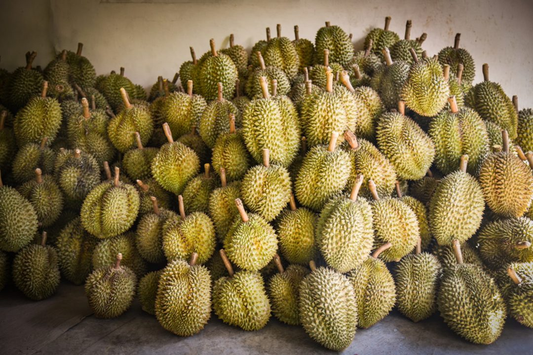 5 Underrated Durian Species You Should Try This Minor Durian Season