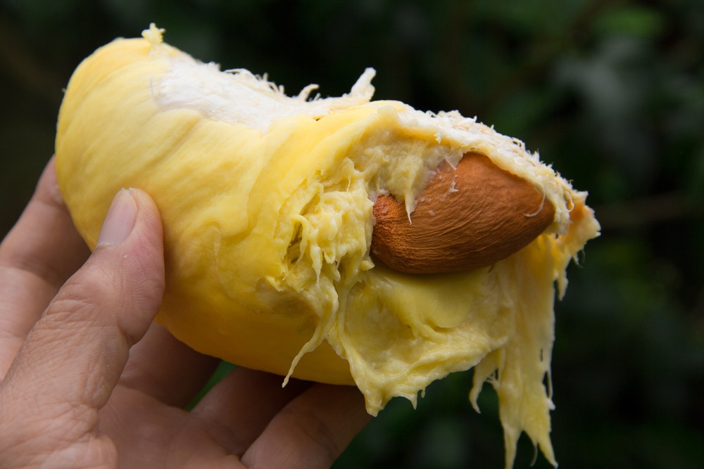4 Unexpected Ways to Use Durian Seeds